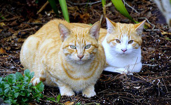 Chats, Animaux, Animal De Compagnie