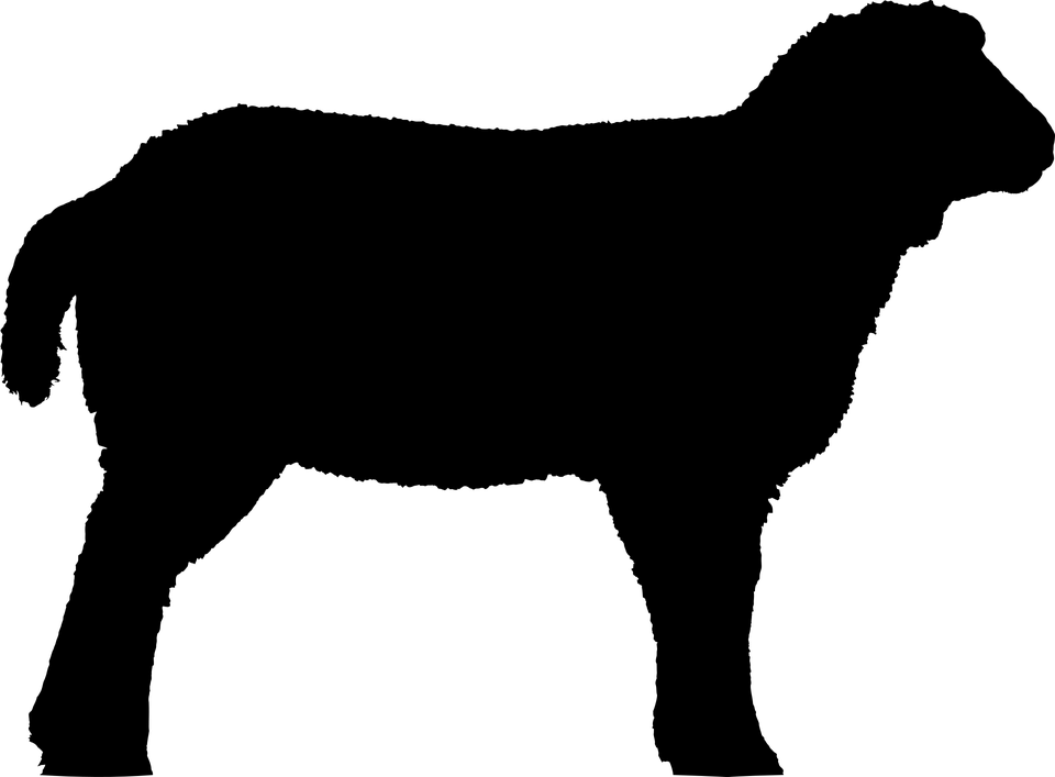 Ovinos Cordeiro Carneiro Grafico Vetorial Gratis No Pixabay