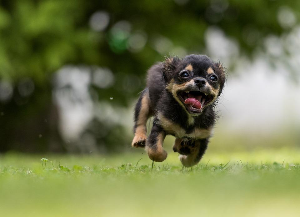 Σκύλος, Δράση, Γλυκό, Ζώο, Σκύλος Που Παίζει