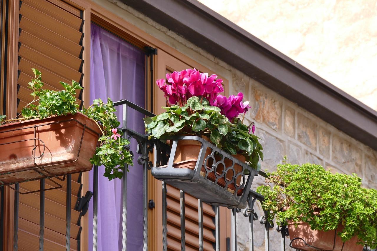 Цветы на балконе фото с названиями