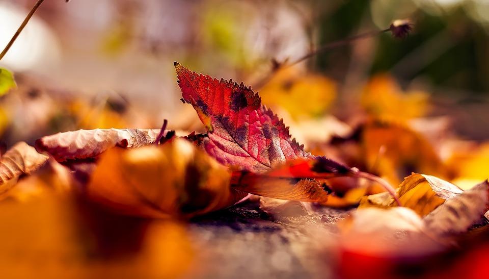 Autumn Fall Leaves Free Photo On Pixabay