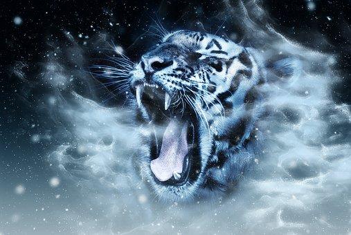 Tigre, Tête, La Faune, Des Animaux