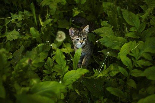 Cat, Animal, Cute, Funny, Pet, Portrait