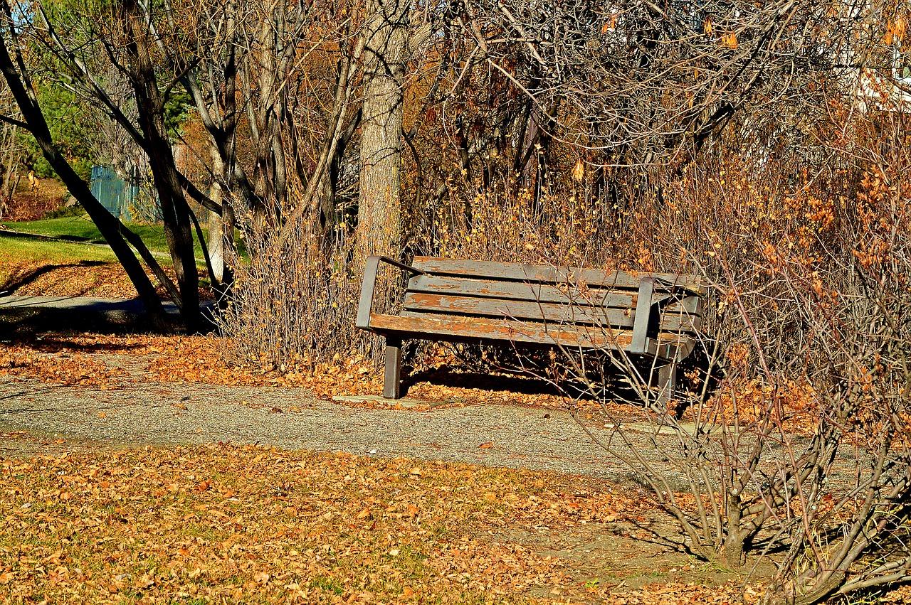 公园,长凳,乡村,秋,树,秋天,自然,景观,公园长椅,安静,和平,叶子,田园风光
