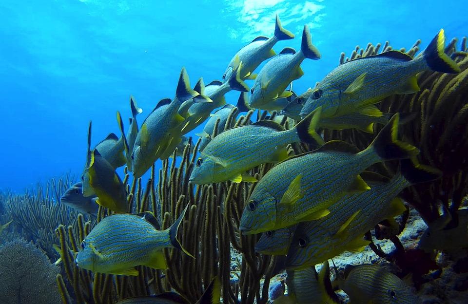 underwater fish world  u00b7 free photo on pixabay
