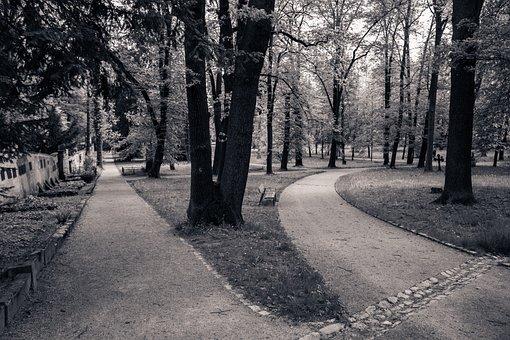 Path, Diverge, Two Ways, Mood, Dark