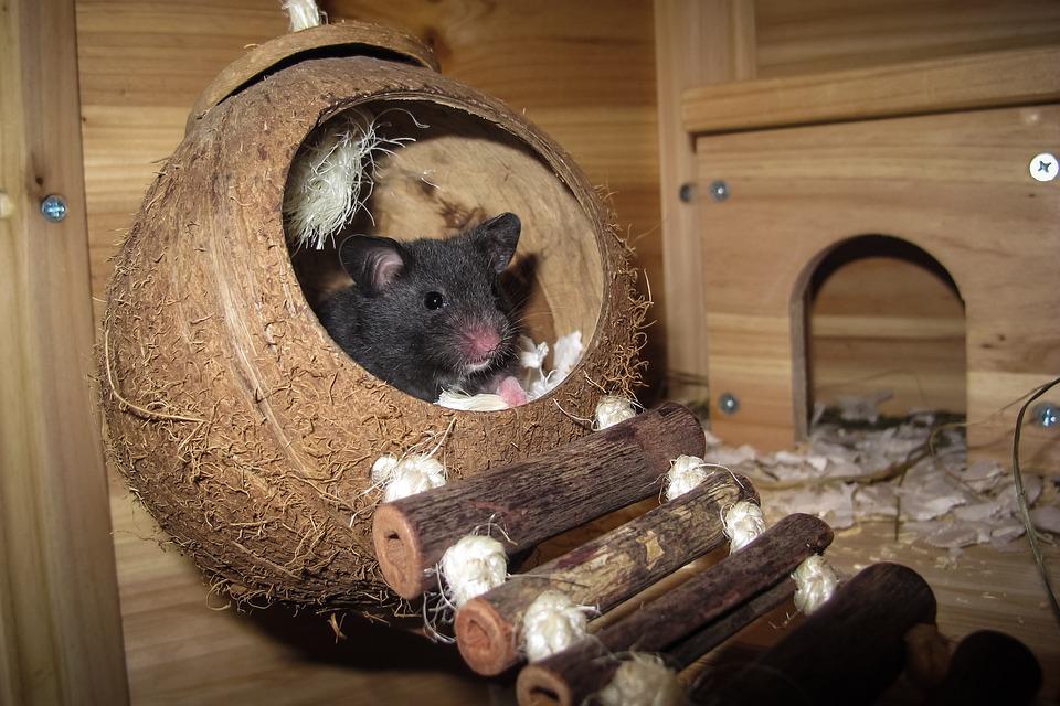 Hamster, Noix De Coco, Sommeil, Nid, Reste, Des Animaux