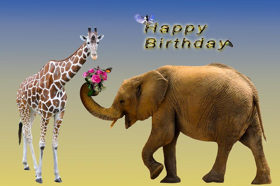 Geburtstagskarte Geburtstag 183 Kostenloses Bild Auf Pixabay