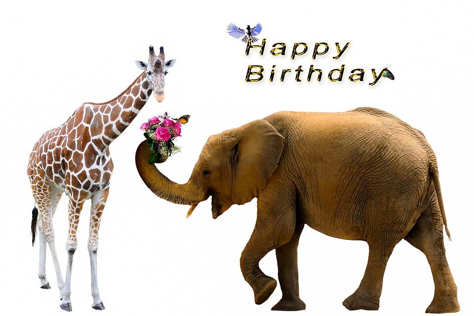 billeder fødselsdag gratis