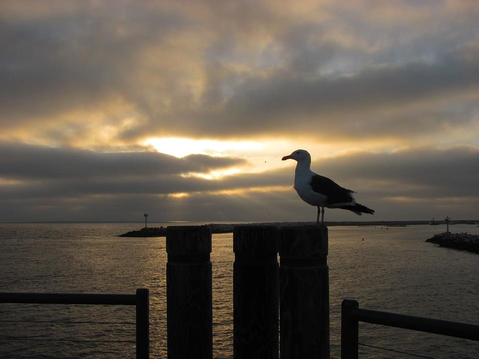 Seagull, Sunset, Pier, Boardwalk, Sky, Gull, Dusk