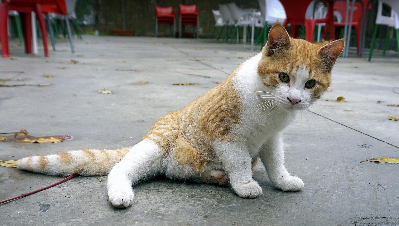 aging cat behavior problems