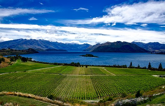 New Zealand, Vineyard, Rippon