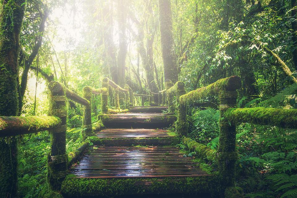 Jungle, Pathway, Steps, Way, Sunlight, Walkway, Forest