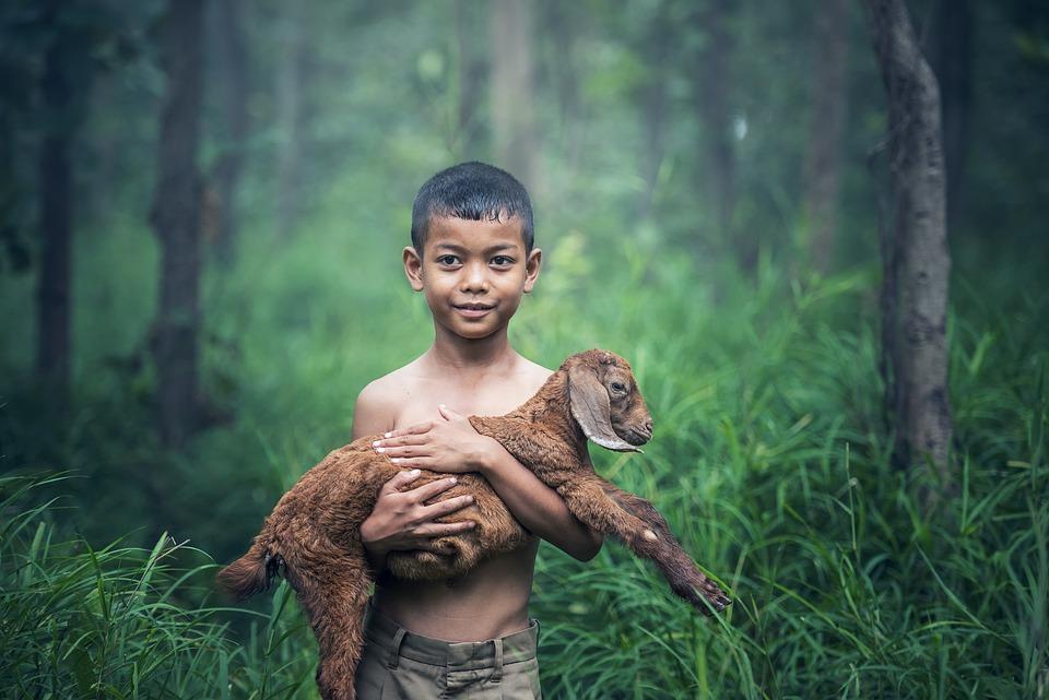 Thai boy holding lamb