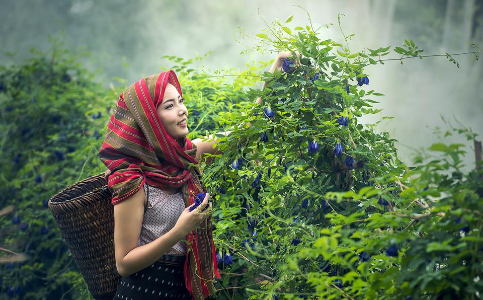 woman picking herbs for respiratory health