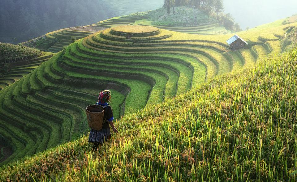 Agriculture, Asia, China, Farm, Harvest, Cottage, Land