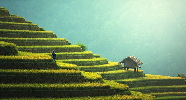 Agriculture, Rice Plantation, Thailand