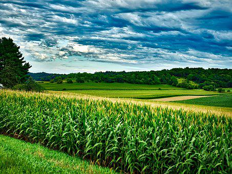Wisconsin, Corn, Soybeans, Landscape