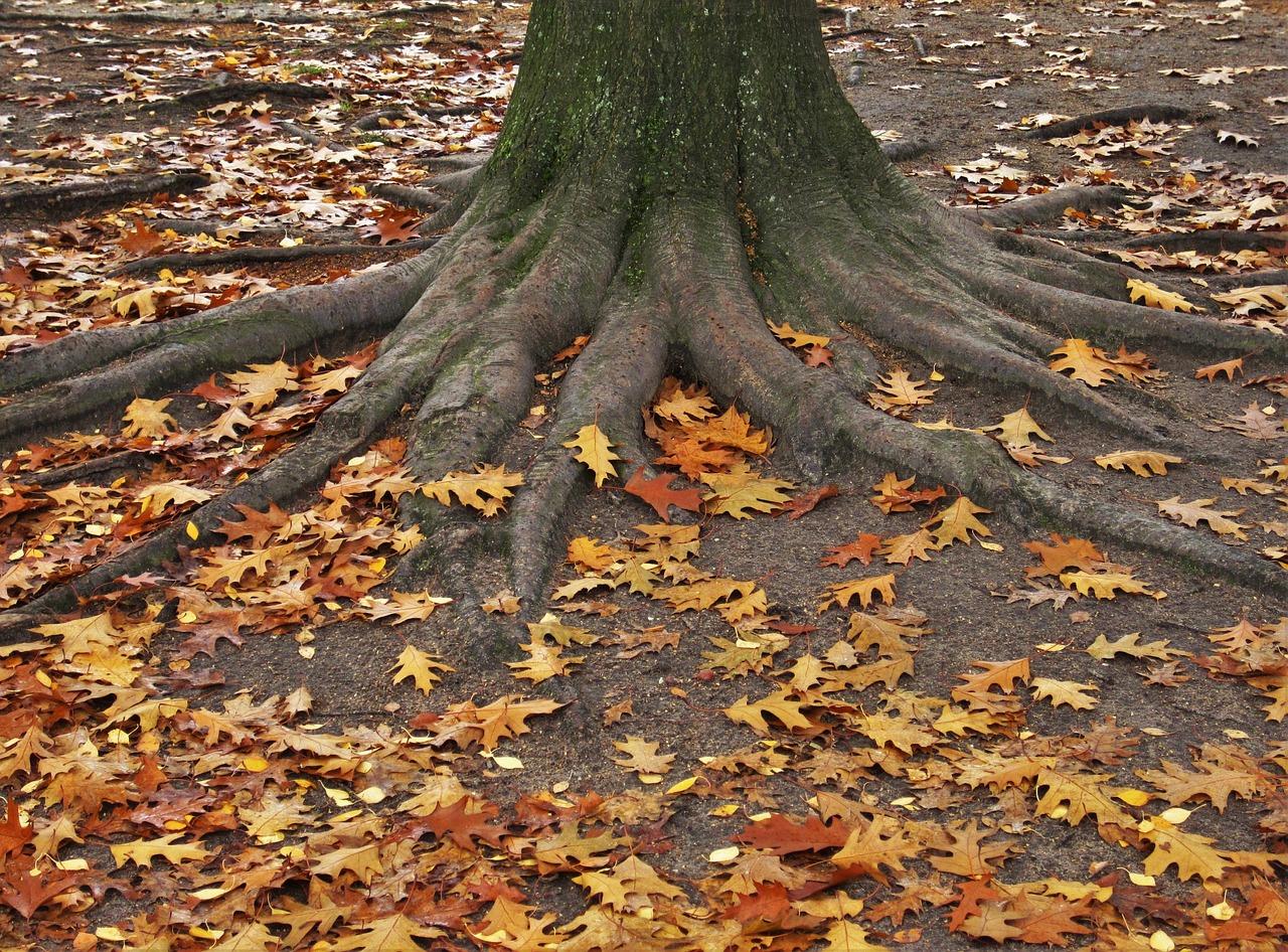 Деревья средней полосы россии фото с названиями одежды