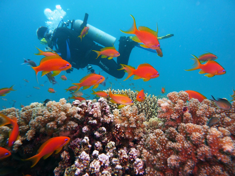 Scuba diving amidst the coral reefs