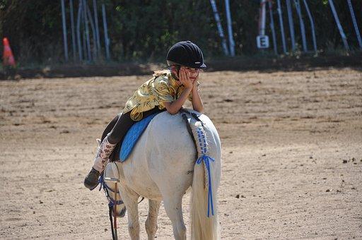 Koń Zwierzęta Pokaż Jazda Konna Koński Cha