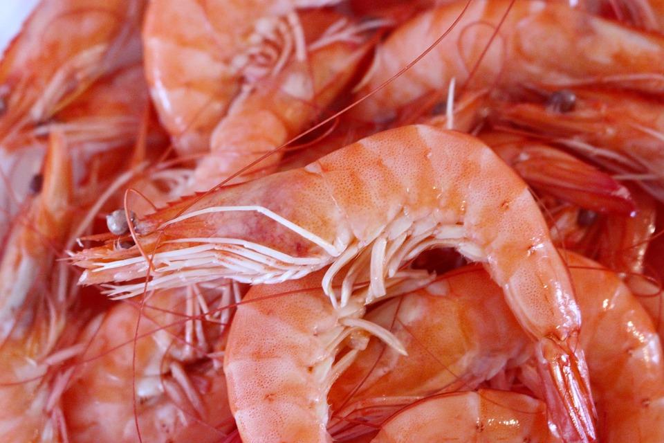 Crevette, Fruits De Mer, Crustacés, Mer, Nourriture