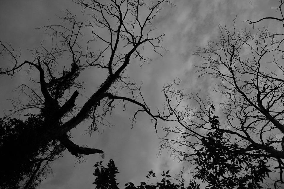 Zwart Wit Silhouet Boom · Gratis foto op Pixabay