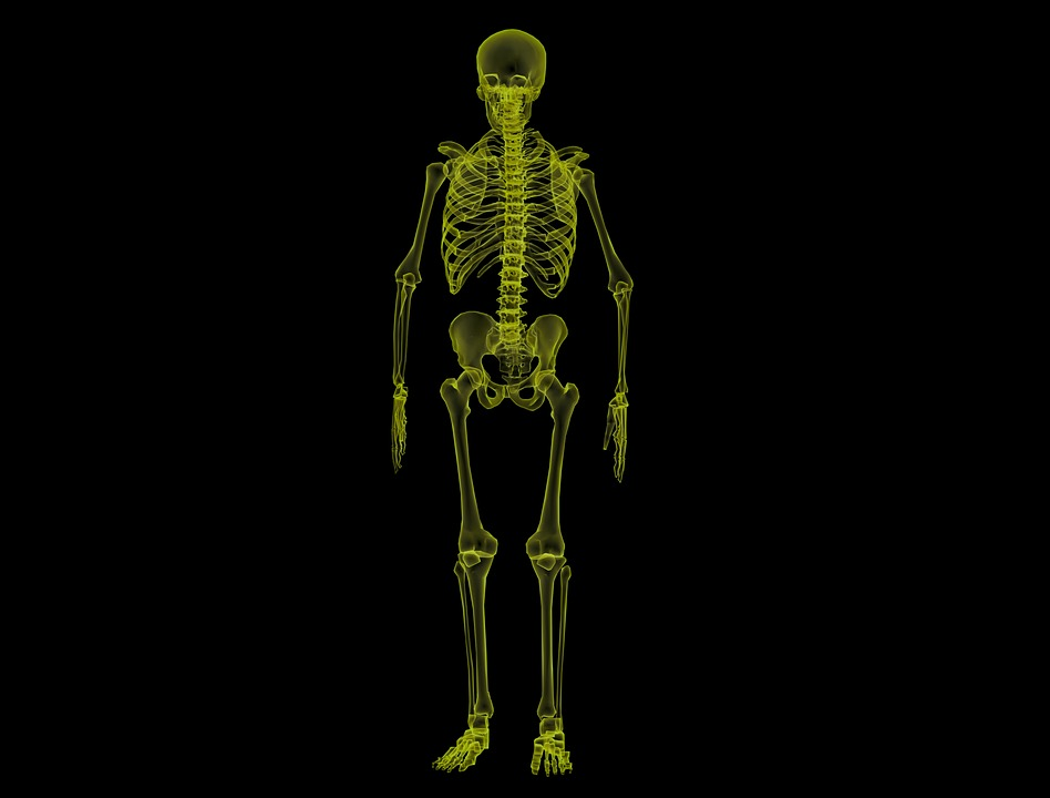Human Skeleton Anatomy Bones · Free image on Pixabay