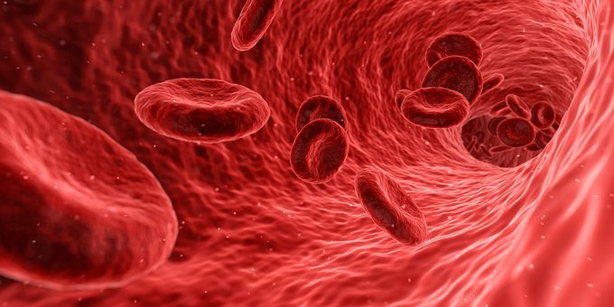 Blood Cells Red Medical Medicine Anatomy H