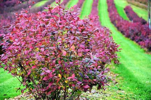 Autumn, Color, Colors Of Autumn, Nature