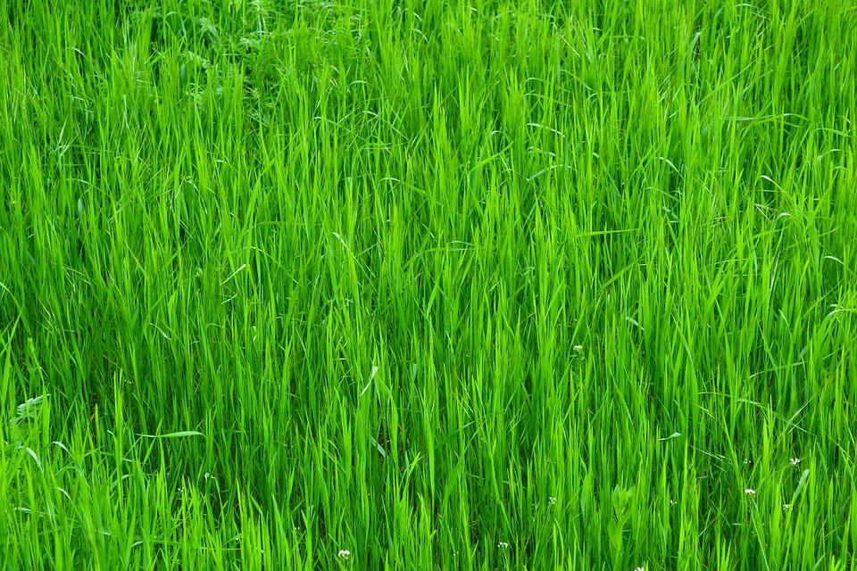 Excellent Grass Green Nature · Free photo on Pixabay FD73