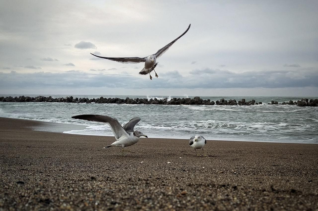 Фото чайки на пляже