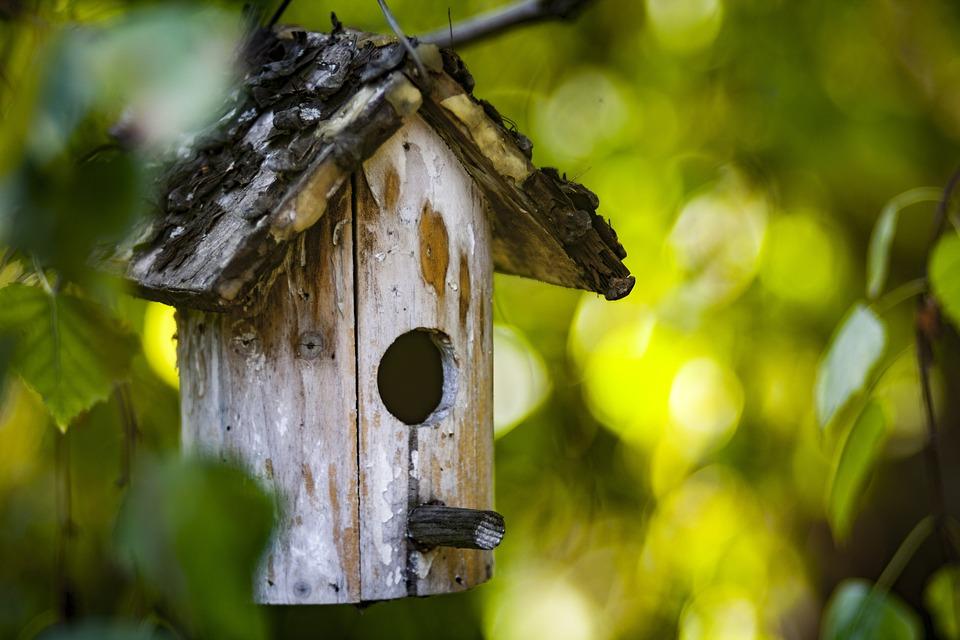 Bird Feeder, Tree, Green, Bird, Nature, Food, Feeder