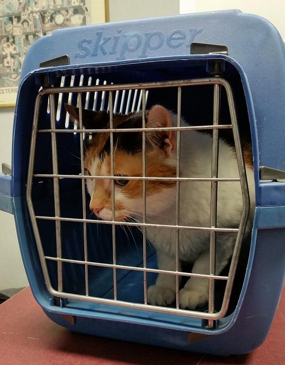 Gato, Transportadora, Animal, Animal De Estimação