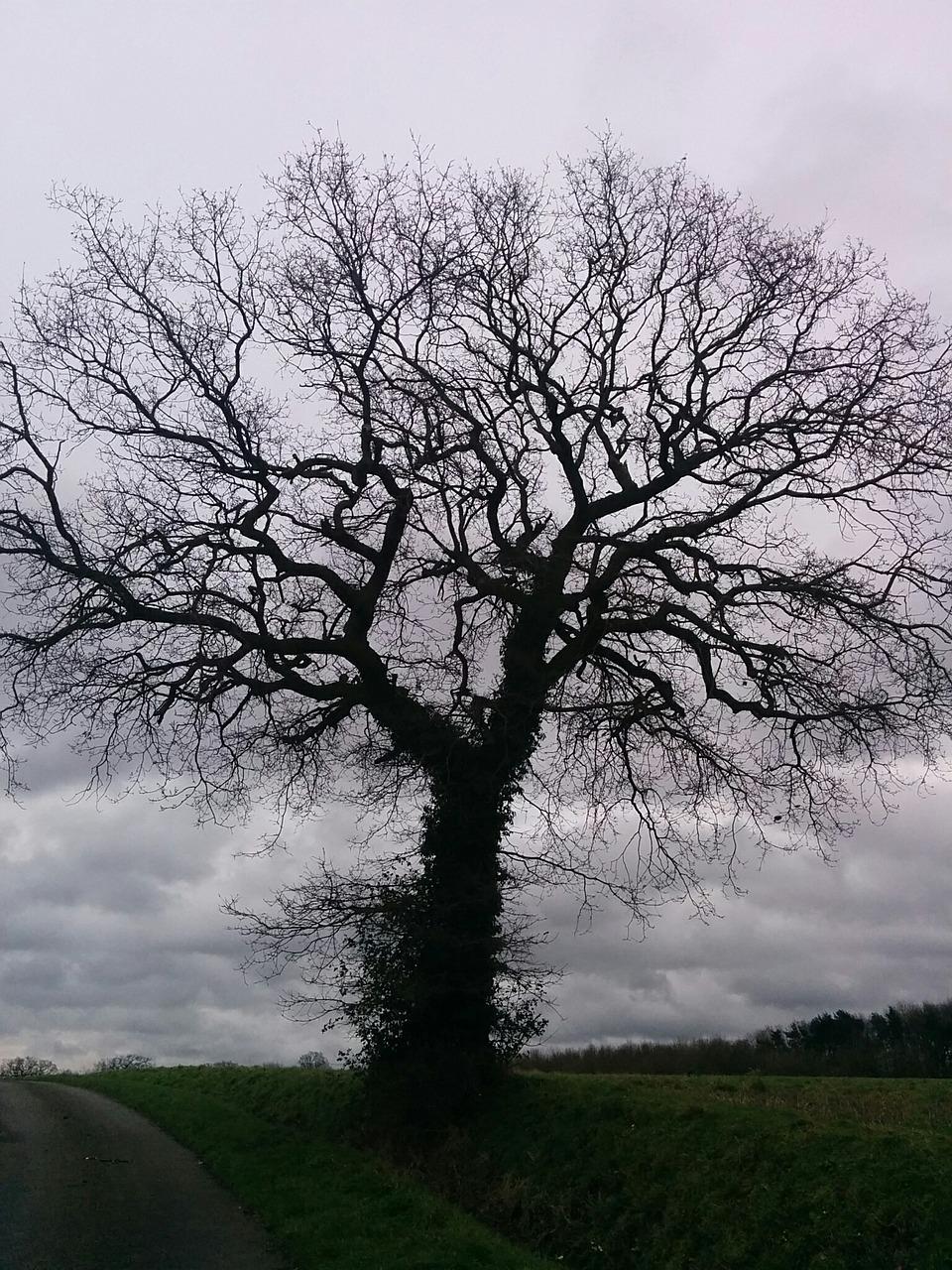 ведь дерево без листвы фото абсолютно