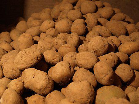 Картофель, Винный Погреб