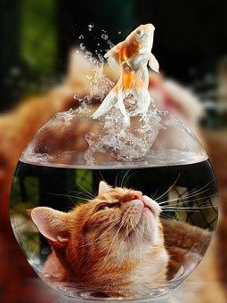 Kočka, Tvář, Zlatá Rybka, Sklo, Zavřít