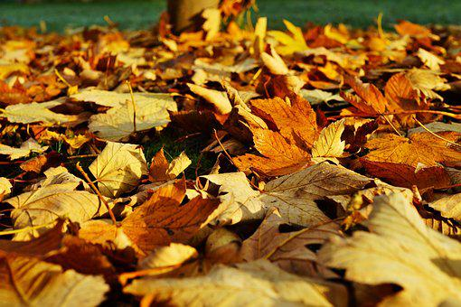 Leaves, Late Autumn, Colorful