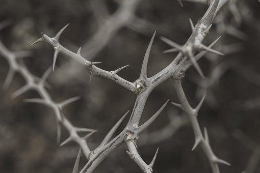Spur, Plant, Prickly, Nature, Thorns