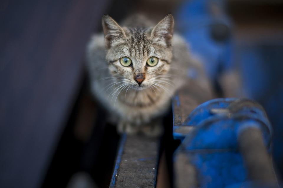 Cute, Animal, Nature, Pets, Street, Kitten, Beauty