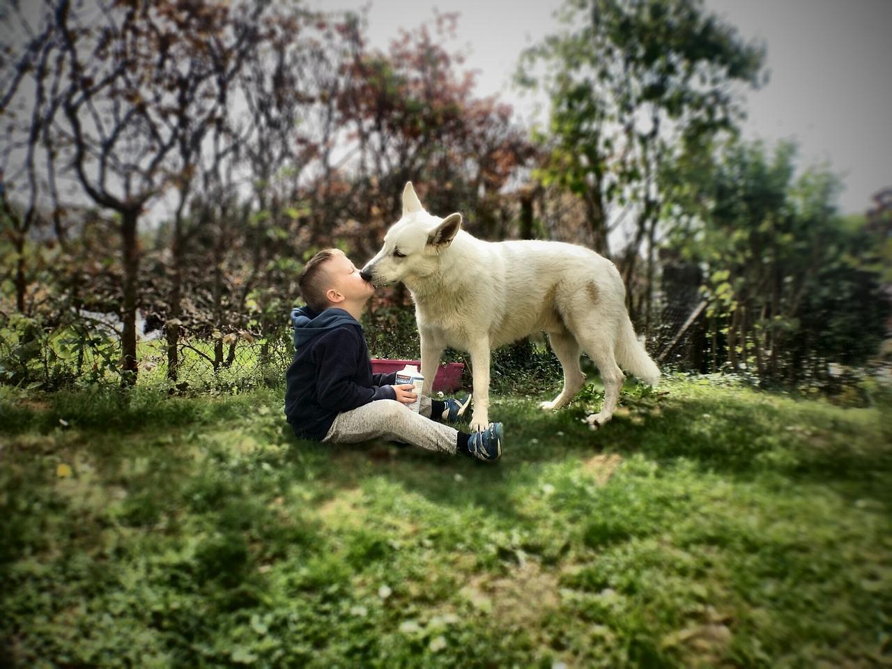 вы целуете своих домашних животных фото никак влияют
