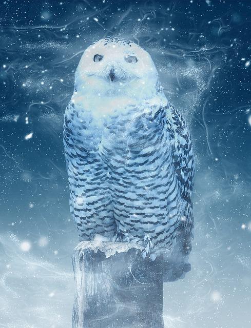 Chouette des neiges image gratuite sur pixabay - Image de chouette gratuite ...