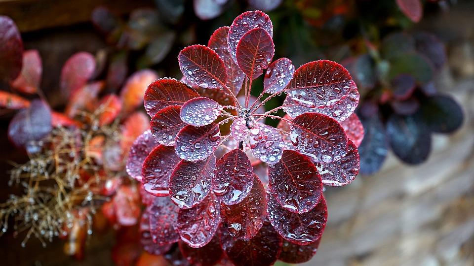 Pflanze, Regen, Natur, Grün, Saison, Blatt, Frisch