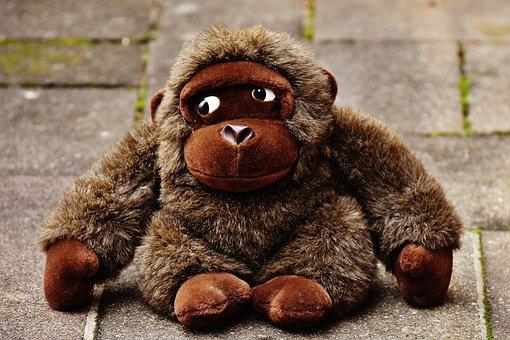 40+ Free Stuffed Monkey & Monkey Images - Pixabay