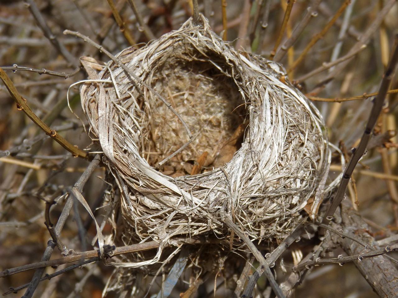 фото картинки гнезда птиц российском понимании