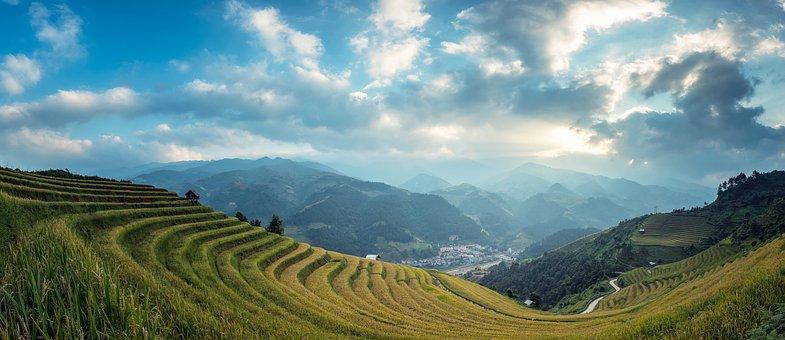 農業であります, グリーン, ライス, アジア, バリ島, カンボジア, 勝利