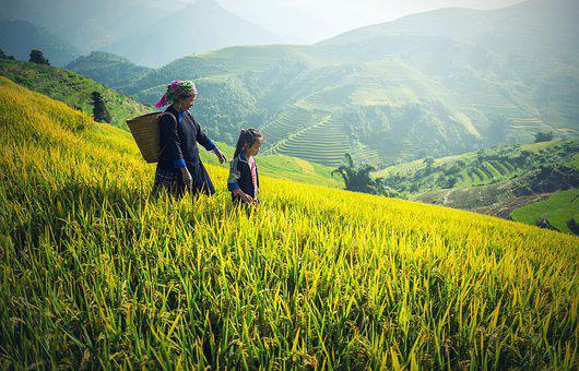Agricultura Asia Atrás Negro Camboya Victo