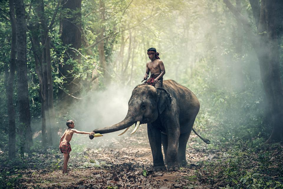 Hvor bør man reise i Thailand? Elefantene er et skue de fleste ønsker å få med seg.