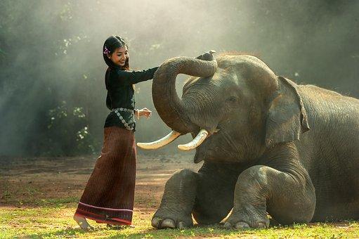 女の子, アフリカ, 動物, アジア, カンボジア, 友人, 友情