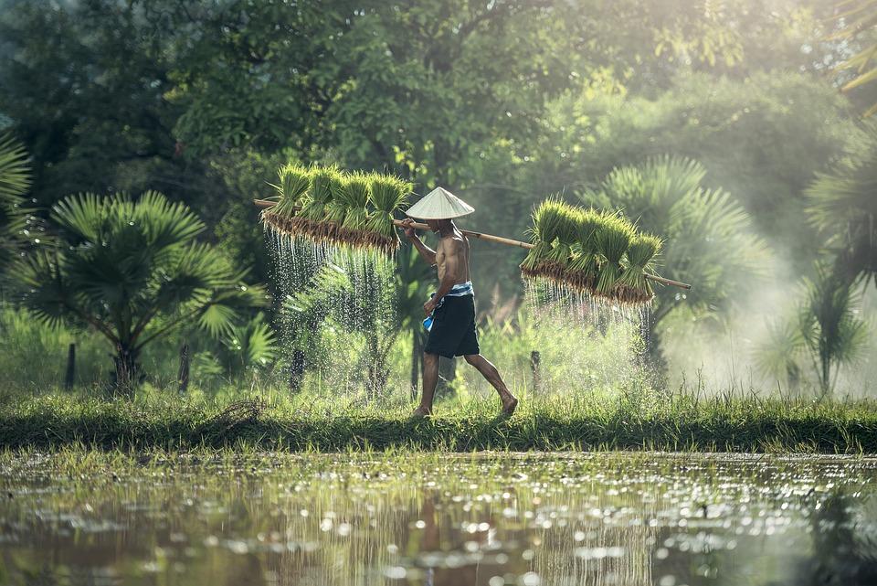 Farmer Harvest Agriculture
